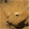 Rhinoceros (Camouflage and Captivity)